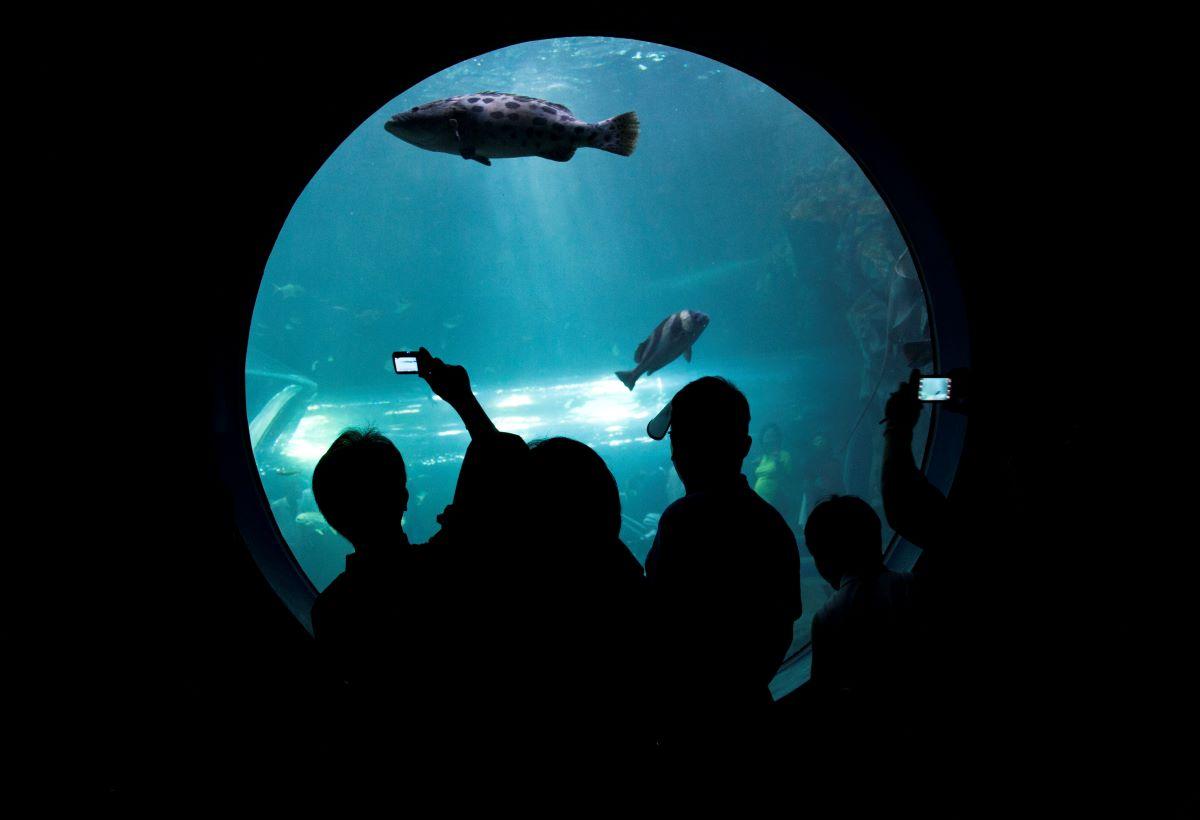 children at the aquarium